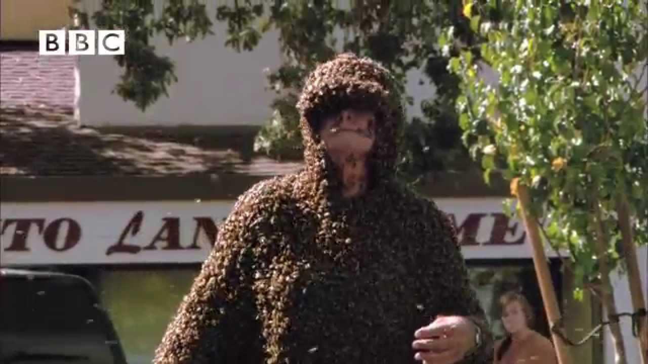 ea810e2b453 BEE-MAN! - YouTube