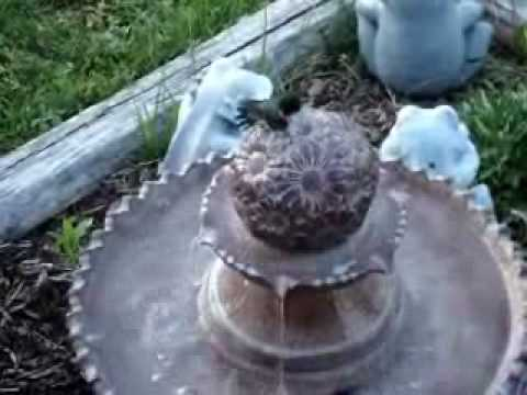 Male Ruby-throated Hummingbird Enjoying a Bird Bath
