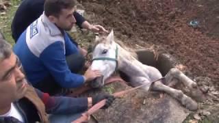 \At Öyle Kurtarılmaz\ Diyerek İtfaiyeye Saldırdı