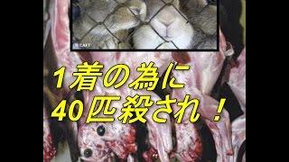 毛皮コートは本当に必要か?年間4000万匹の 動物たちが毛皮のために