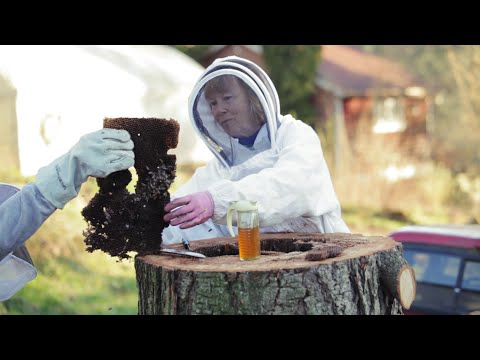 Saving a Natural Log Bee Hive