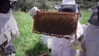 تربية النحل بالضفة.. مردود اقتصادي ومقاومة للاحتلال