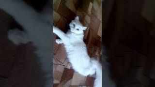 Просит кота
