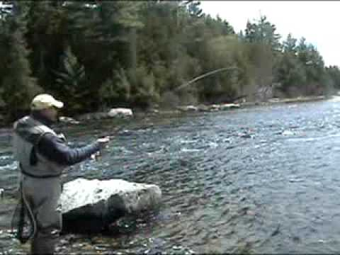 Fly fishing lakewood camps rangeley maine 39 s rapid river for Maine out of state fishing license
