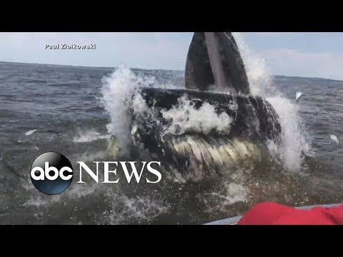 Fishermen rescued after whale flips boat