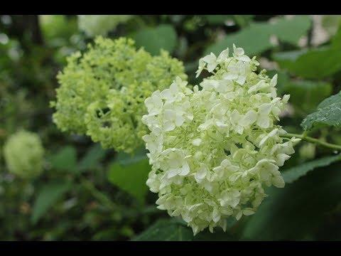 小さな窓の花ごよみ 618 梅雨の朝 ♪ ガラタ橋から :つのだたかし ♪