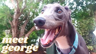 WE ADOPTED A GREYHOUND | Our first 24 hours with our retired racing rescue