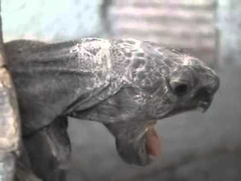ROUGH TURTLE SEX WITH ORGASM