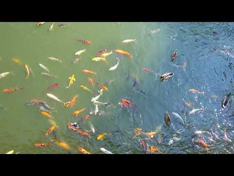 Fish and Ducks at Omaha Henry Doorly Zoo