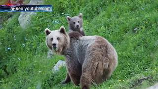 Что делать при встрече с медведем?