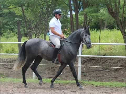 Horsemanship Clinic with Shelly Rosenberg, Costa Rica, August 2014