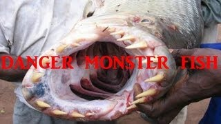 огромный мутант.озерно - речная рыба семейства карповых.huge mutant.