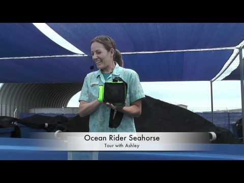 Ocean Rider Seahorse Farm - The Magical World of Seahorses