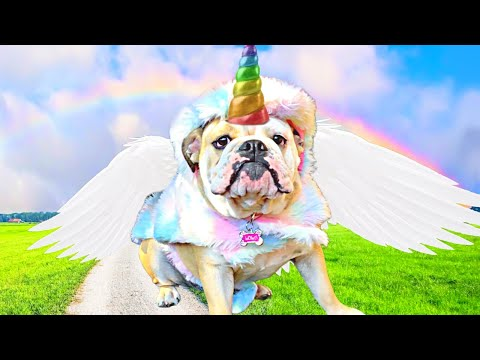 FUNNY DOG DRESSED as UNICORN! CUTE Dog Reacts to HALLOWEEN Costumes For Dogs!