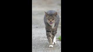 무서운 고양이 피해 도망 가는 중