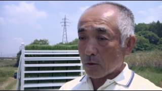 Japan Farmers Plant, Seek Radiation-free Rice