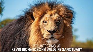Volunteering at Kevin Richardson's Wildlife Sanctuary - Raw Videos