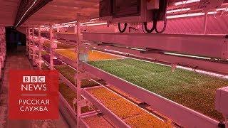 Салат из подземелья: как работает лондонская ферма в бункере времен Второй мировой
