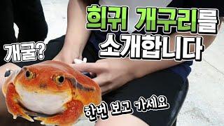 내펫소 2회 해외멸종위기 개구리를 사육하는 고등학생 개…