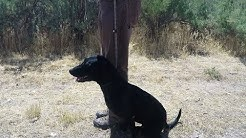 Teaching Your Dog to Sit to the Whistle