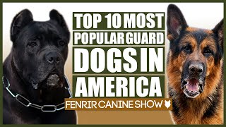 Top 10 GUARD DOG Breeds in the USA!!