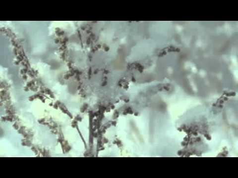 Сказочная природа зимы!