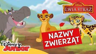 🦁 Poznajemy zwierzęta!   Lwia Straż   Disney Junior Polska