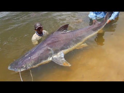 TOP 5 Amazon River Monsters