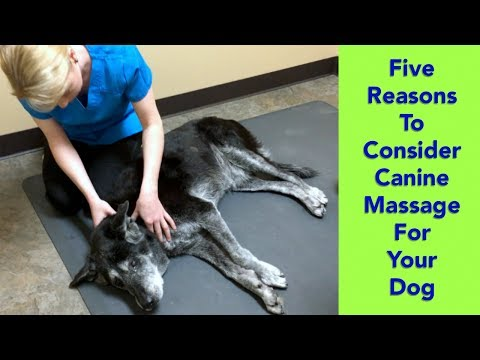 5 Reasons to Consider Canine Massage for your Dog