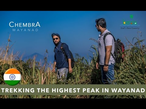 Trekking the highest peak - Chembra peak Wayanad Kerala 4K video