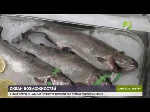 видео: В Санкт Петербурге начал работу  Международный рыбопромышленный форум