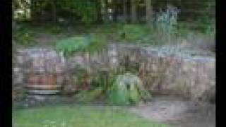 Gunnera Revived - Time lapse Photography