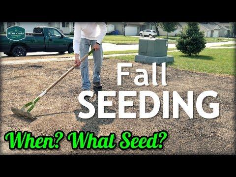 fall-cool-season-lawn-seeding-tips-//-when?-what-grass-seed?