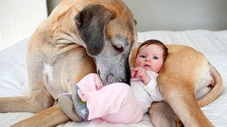 Great Dane and Baby Compilation thumbnail