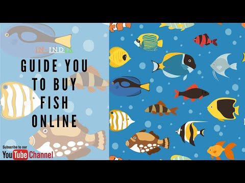 HOW TO: BUY FISH IN INDIA | Online | Fish |