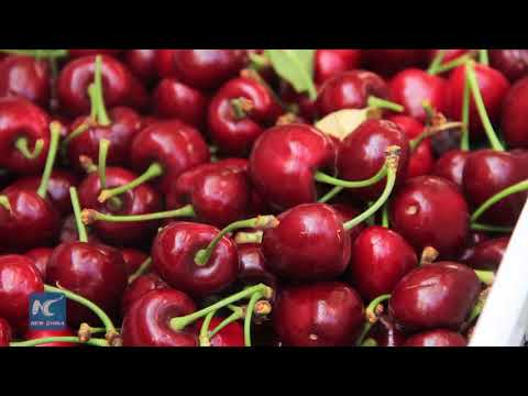 Chilean cherry export to China hits new record of over 100 tons