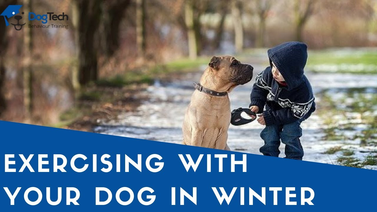 Watch Exercising with Your Dog in Winter video