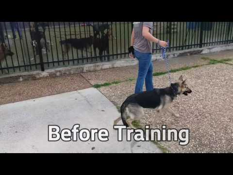 Dog Training - No Pulling No Barking