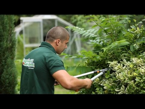 Professional Gardening Services in London | Fantastic Gardeners