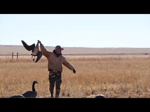 HILARIOUS Colorado Goose Hunting!!