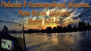 Рыбалка в Нижегородской области. Река Волга. Щукино. Июнь 2016