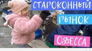 Староконный рынок Одесса. Отдаем Кошку в Хорошие Руки и Покупаем Барабан. Барахолка и животные
