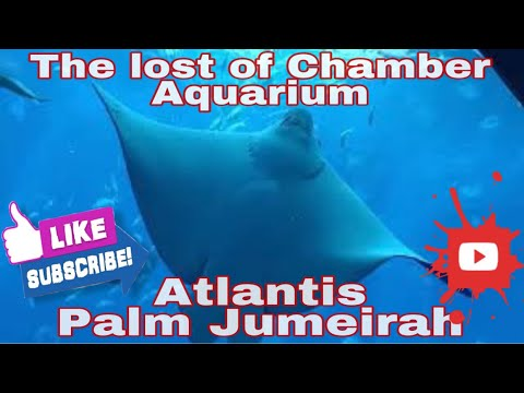 Atlantis Palm Jumeirah – The Lost of Chamber Aquarium Dubai UAE | LindoVlog