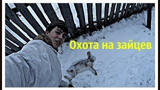 Охота на зайцев «Отец Перекрыл»