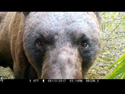 Big Cypress Trail Camera Pickup