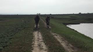 Самая красивая деревня и лошади чистокровные.