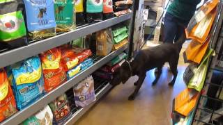 Scent Work Dog Training Buster's Natural Pet Supply - Video 1