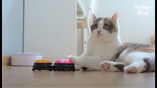 Clever Cat Pushes Buttons To Talk About Something To Her Human | Kritter Klub