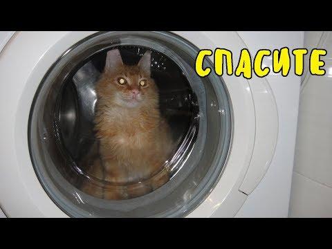 КОТЕНКА ПОСТИРАЛИ , ДЖИНДЖЕР - Смешной Кот