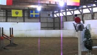 Ellis: Dressage horse for sale